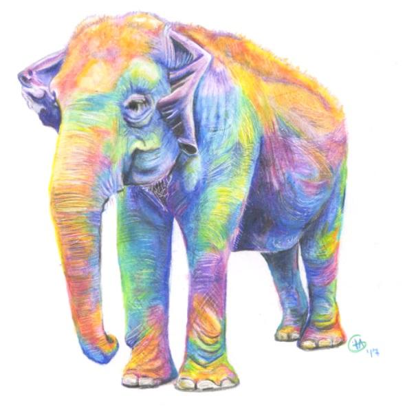 Fine Art Prints - Image © Arte for Elephants