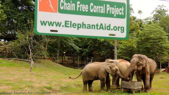 Chain-free corrals are the humane solution to release captive elephants from chains. ©Image: Elephant Aid International