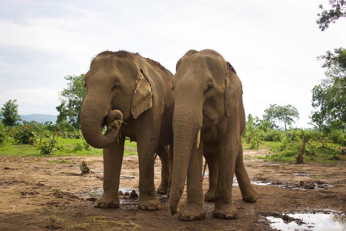 You can still enjoy the presence of these wonderful beings without riding them or forcing them to engage in unnatural behaviors. Image © Diana, The Elephant Soul