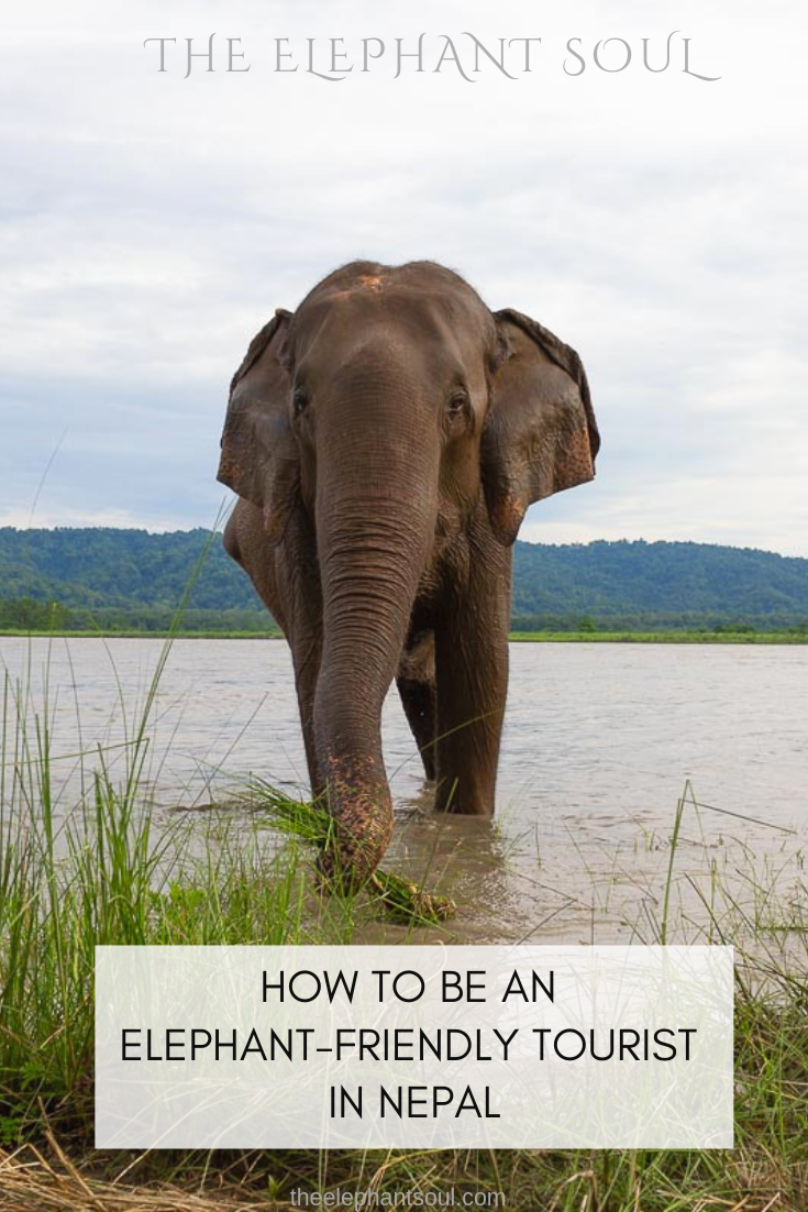 TES Blog - How to Be an Elephant-Friendly Tourist in Nepal.png