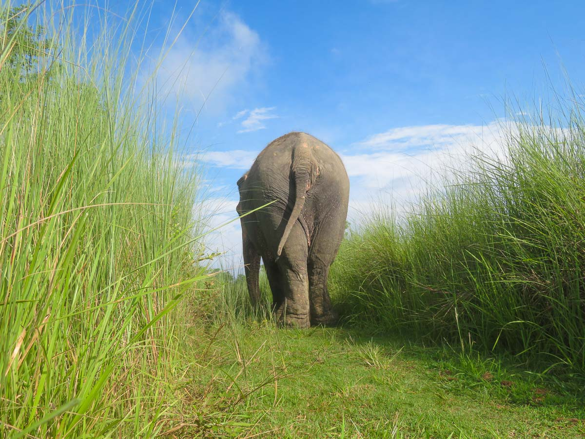 Lucky Kali's freedom is possible thanks to  Association Moey  and the generosity of those who donate regularly to her monthly costs to live a dignified and safe life in retirement. © Image: Lena Quénard