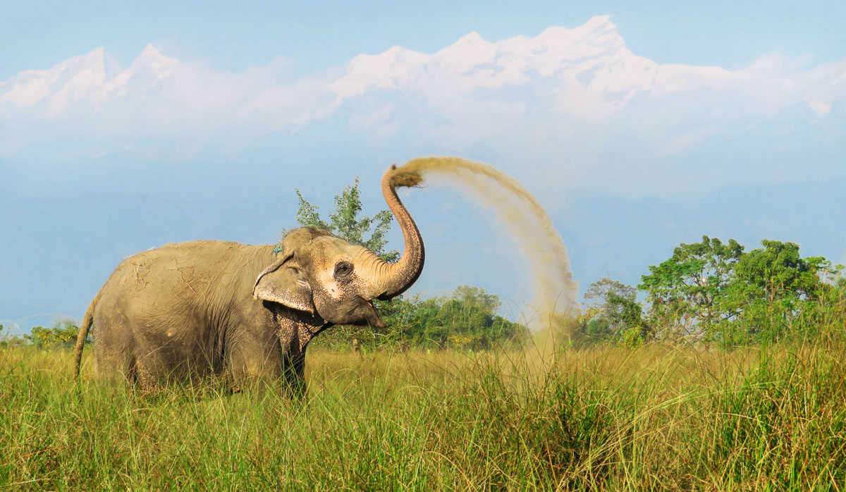 Rescued elephant Lucky Kali taking a dust bath with the Himalayas in the back. © Image: Lena Quénard