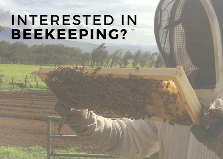 Interested in Beekeeping?