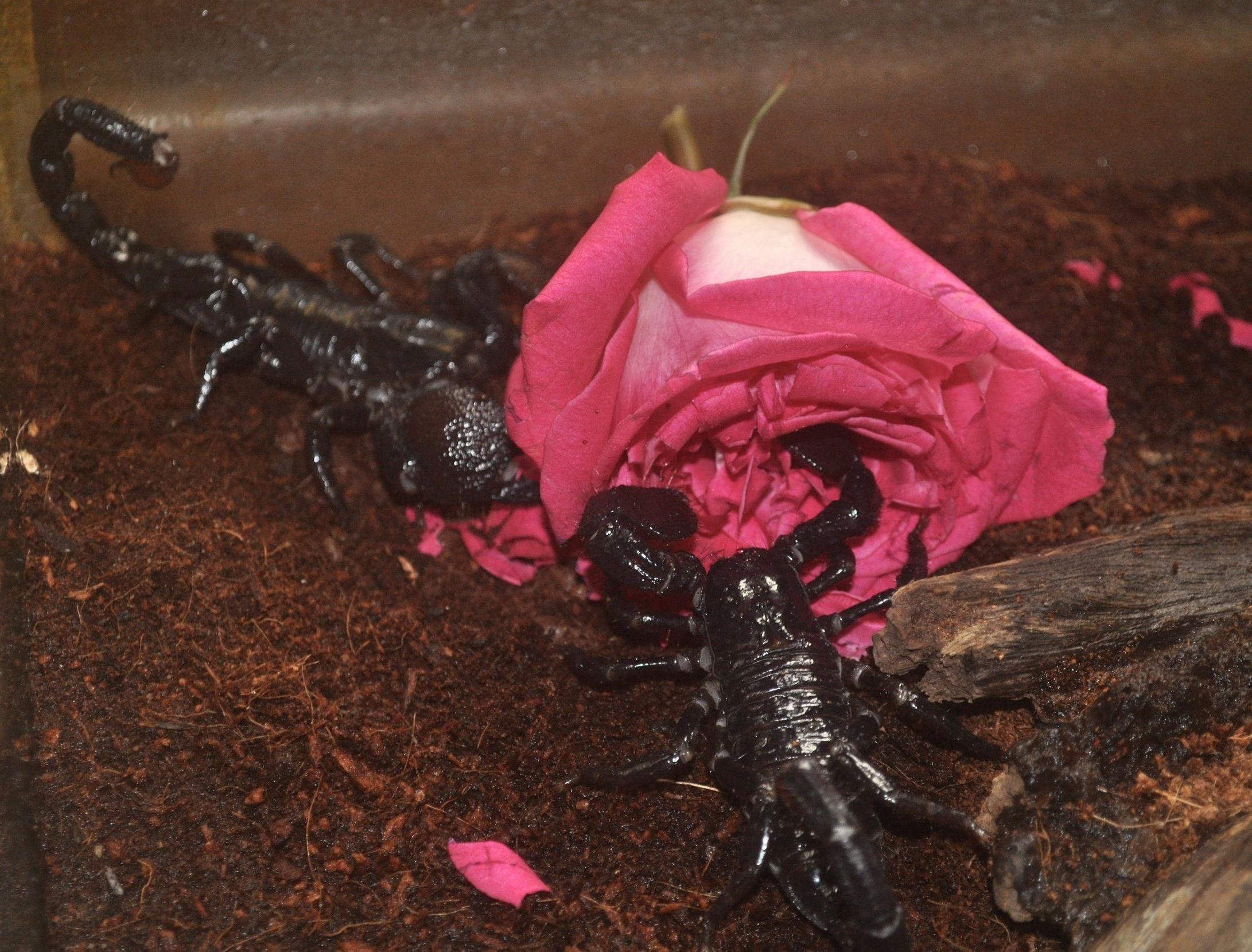 Scorpion 1.jpg