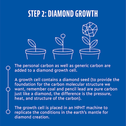 ashes-to-diamonds-growth-phase.jpg
