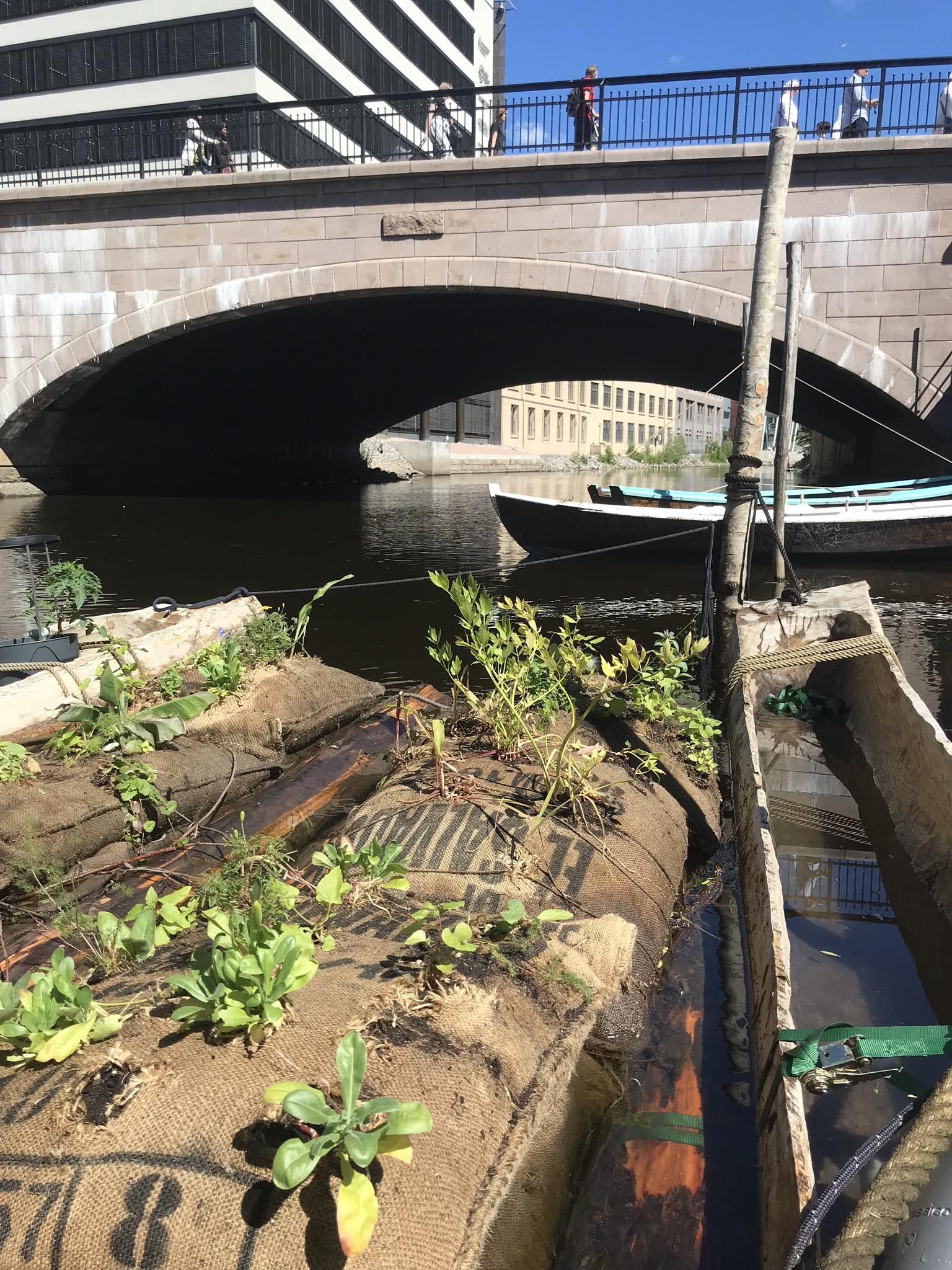 Flåta er laget av tømmerstokker med kaffesekker oppå, fulle av jord. Vi har planta blomster for at pollinerende insekter skal komme til flåta vår, og masse nyttevekster som vi forhåpentligvis kan spise til høsten. Foto: Hanna Bjørgaas