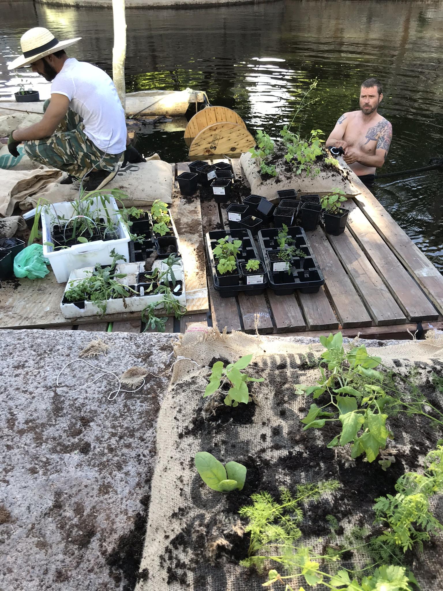 Flåta ble beplanta 12. juni, til stor begeistring fra folk som kom over Vaterlandsbrua. Foto: hanna Bjørgaas