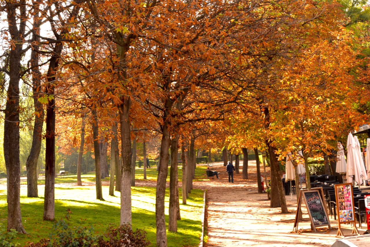 The fall colours in Retiro Park are stunning