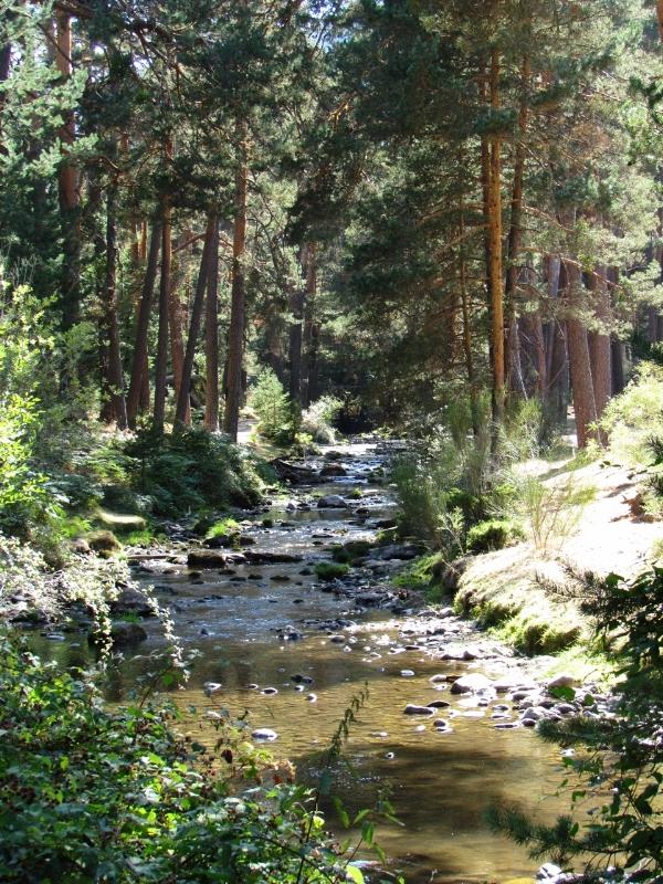 Walk along the stream, or walk through it to avoid the summer heat.