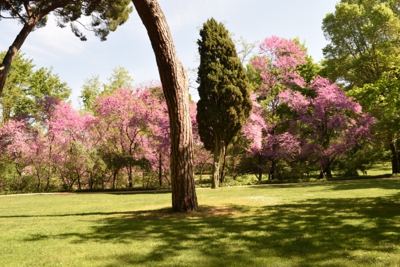 Large rambling lawns with majestic trees make up the English gardens in Capricho park.