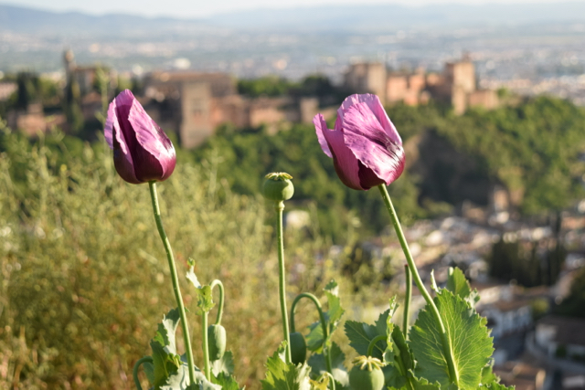 The Alhambra is situated in a gorgeous setting, so admiring it from far is almost as rewarding as seeing the details of all the palaces within the complex.
