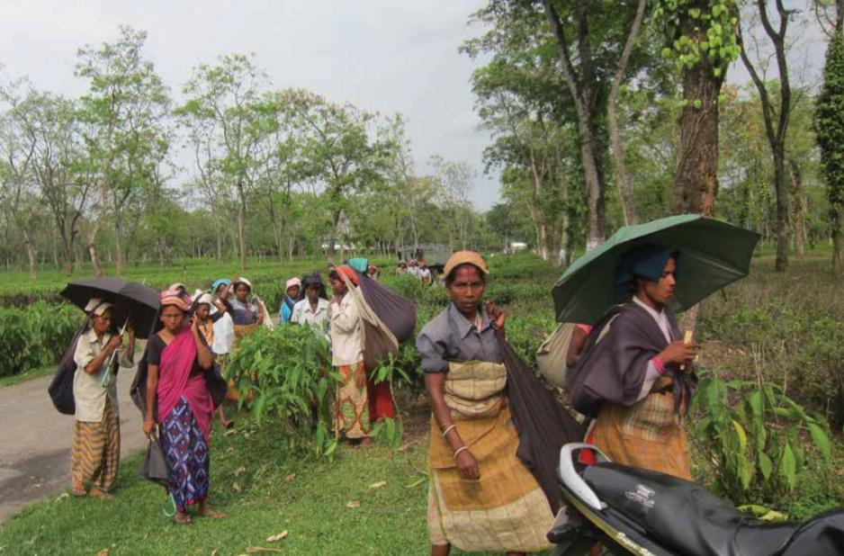 rungamuttee-estate-workers.jpg