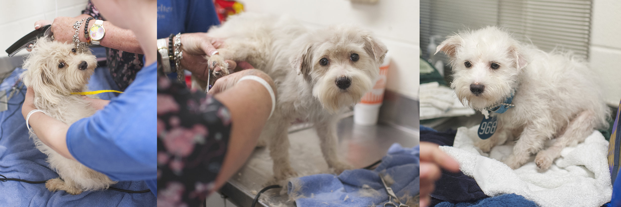 Darci and Melissa grooming and bathing a dog at  Harris County Veterinary Public Health .