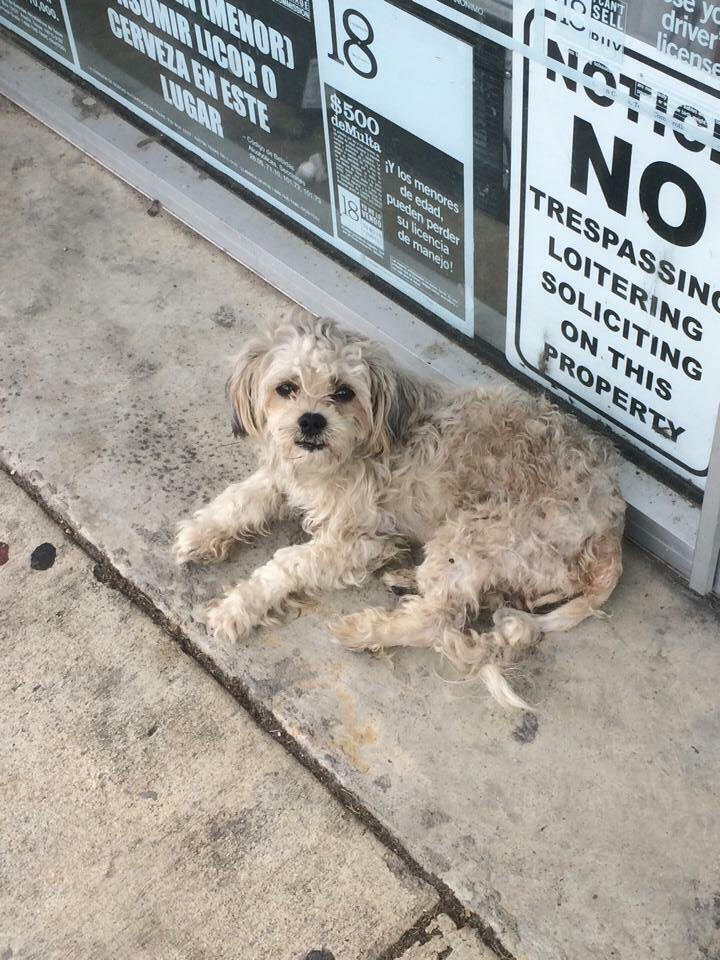 This was Calvin before, when he was dumped outside of a local business in Houston before a big storm.