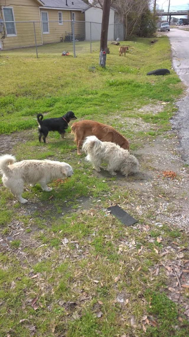 Zoe before (brown dog in middle).