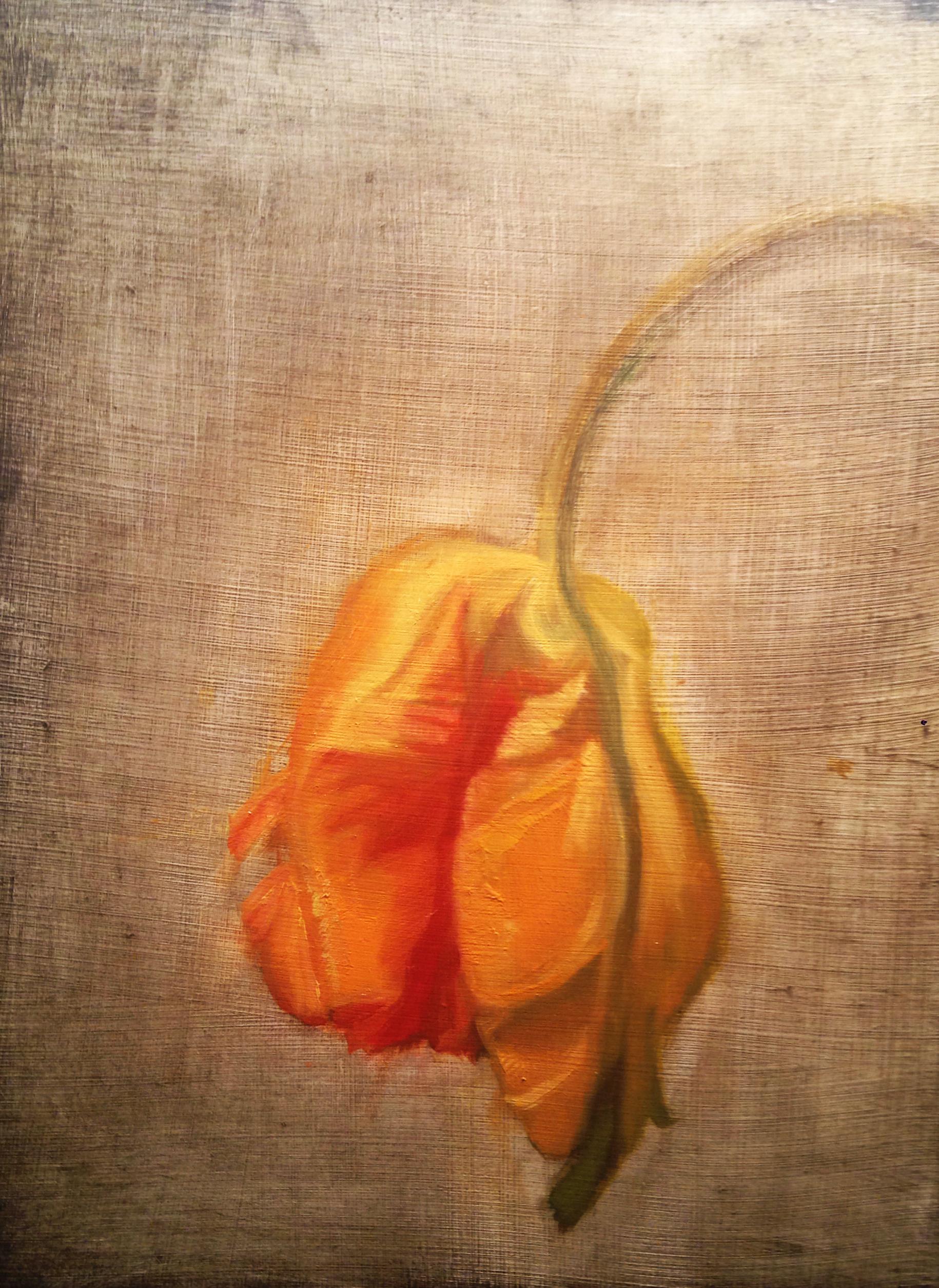 orange parrot tulip.jpg