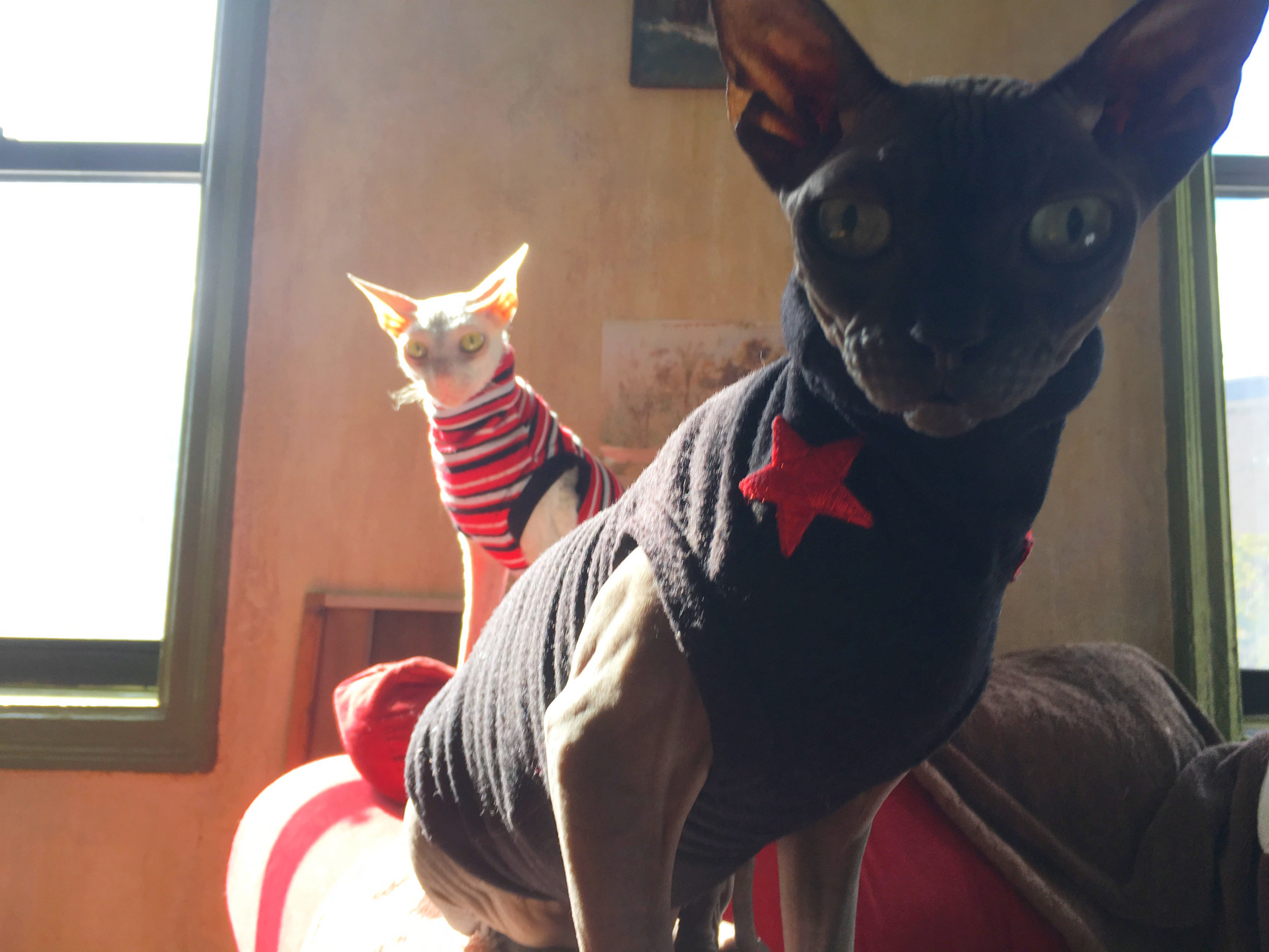 The Dynamic Duo. #cats4cats