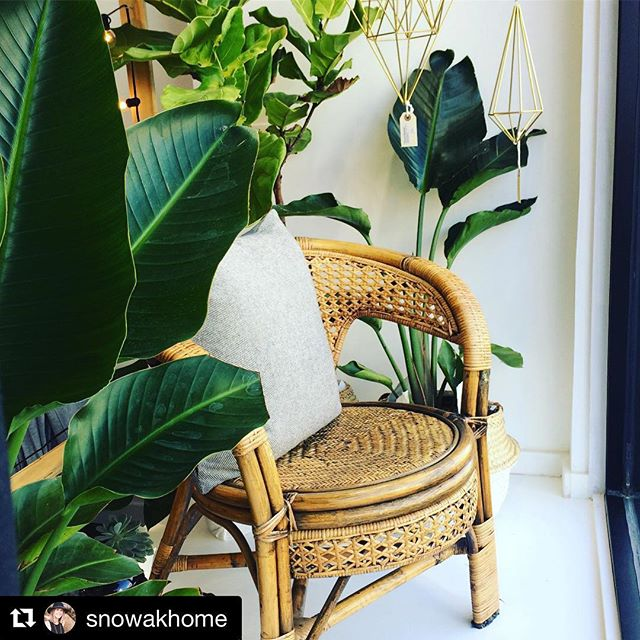 Repost! From @snowakhome 🥰 🌿  Window display @saltshop.ca that I want to live in! Thrifted chair from @snowakhome plants from @botaniccreative.ca and himmelis by @lumotadesigns 🌿✨dreamy ✨🌿#thisiswhyihavetothriftshopeveryday #jungalowstyle #windowdisplay #saltshopca #plantsmakepeoplehappy