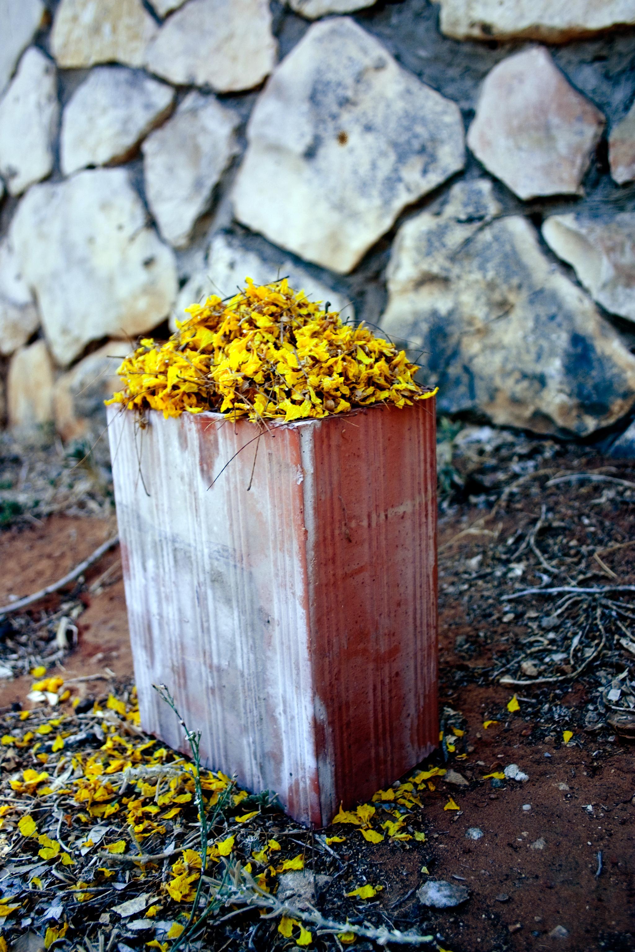 1-a.-Brick-Yellow-flower-.jpg
