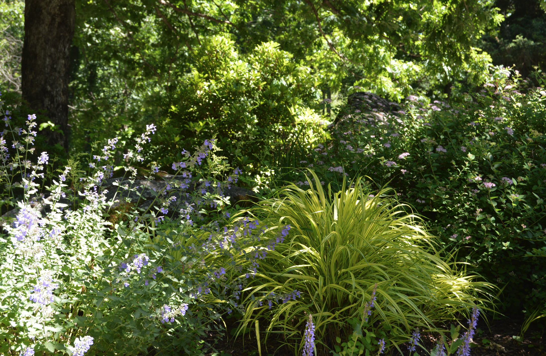 Copy of landscape design plantings in Croton, NY