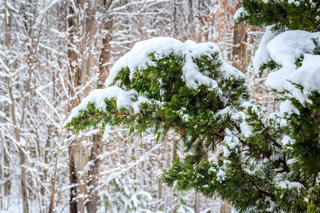 4 Best Juniper Cultivars for your Croton-on-Hudson NY Winter Landscape Design