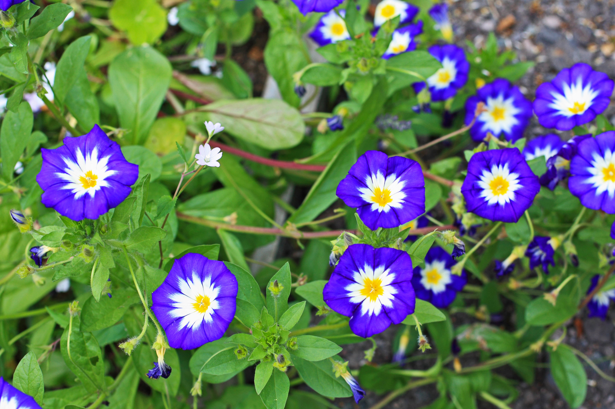 Stunning Annuals for Westchester County Landscaping