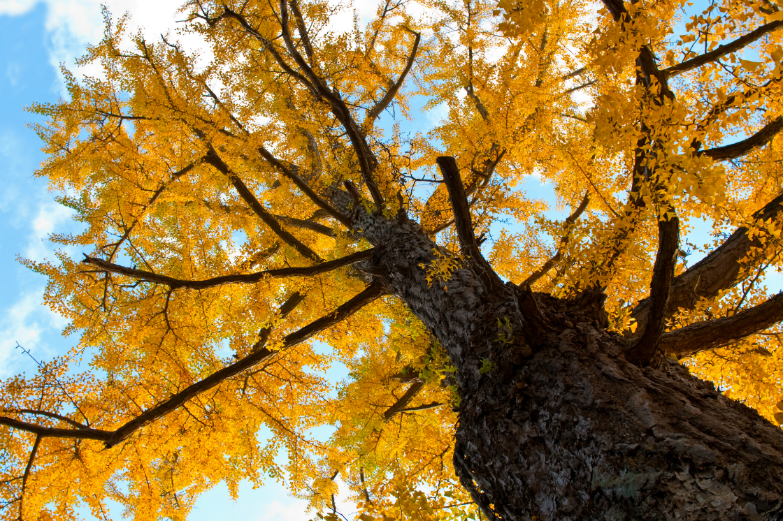 6 Best Trees For Your Landscape Design During The Cooler Months In