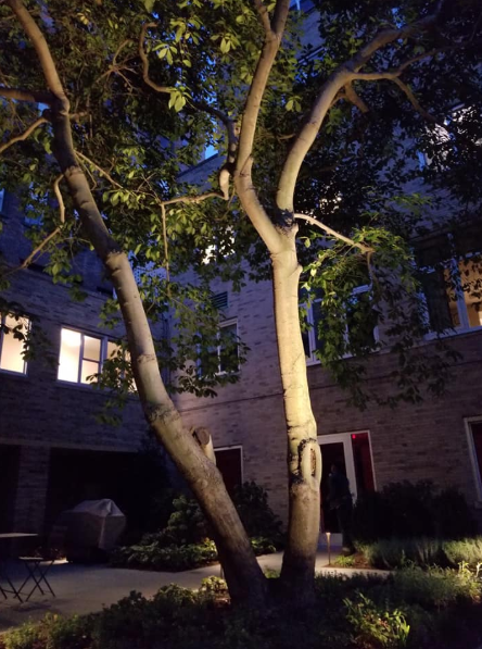 How Landscape Lighting Complements Your Softscapes in Yorktown, NY