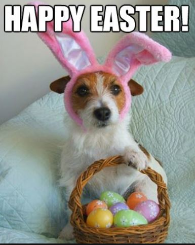 Easter puppy.JPG