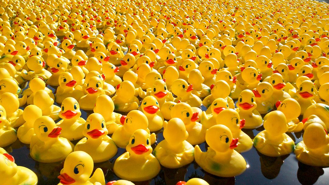 3 Rubber Duck Racing.jpg