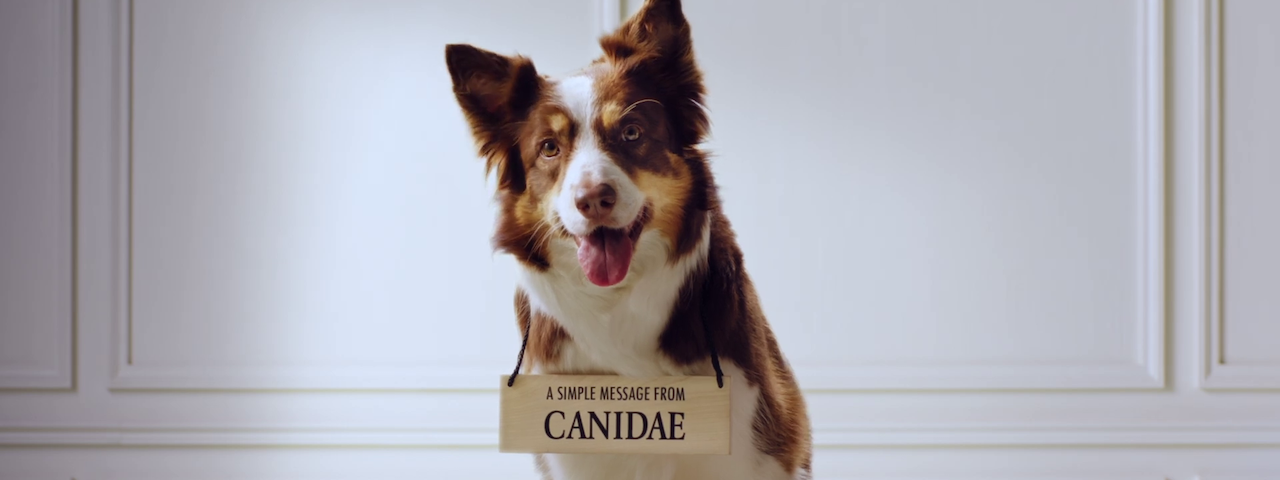 canidae_carousel.png