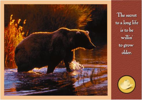 BearSquare.jpg
