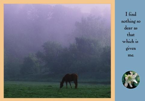 Horse In Western Meadow copy.jpg