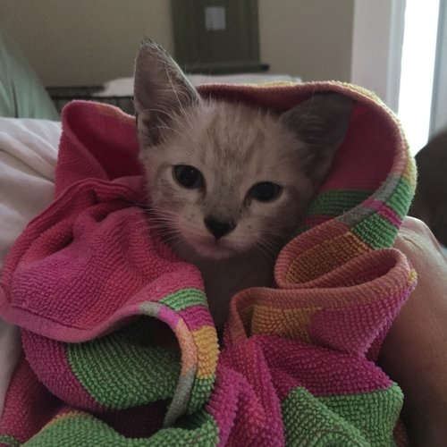 Scout - and his three siblings, and mother were found and trapped in an alleyway in a neighboring development. Scout is paralyzed from the waist down.