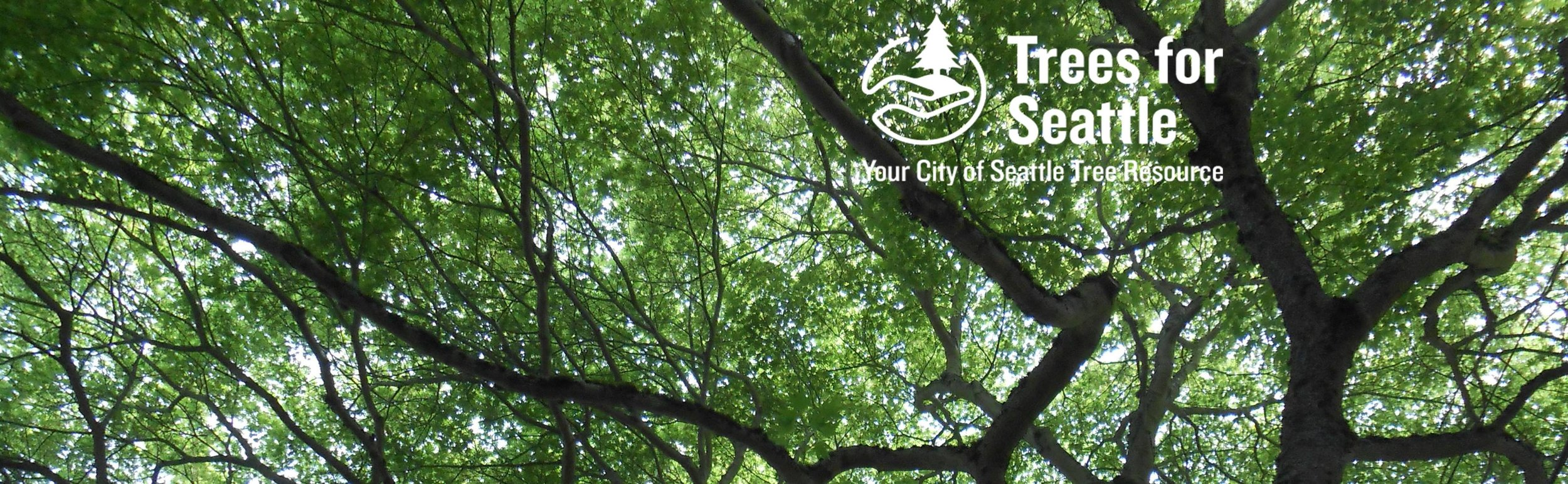 Trees for Seattle  is the urban forestry task force for the City of Seattle.   |   Image via  Trees for Seattle .