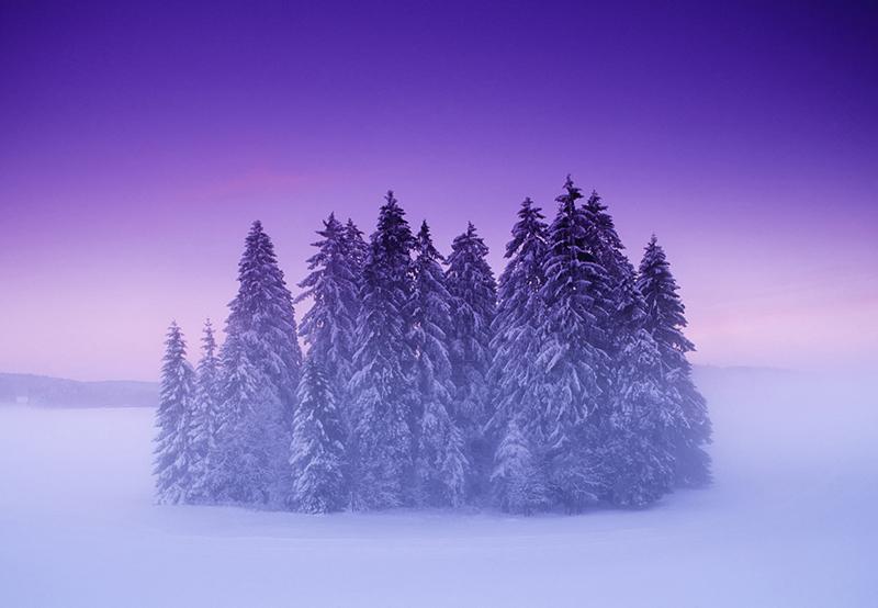 TreeIsland.jpg