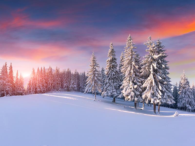 SnowScenePink.jpg