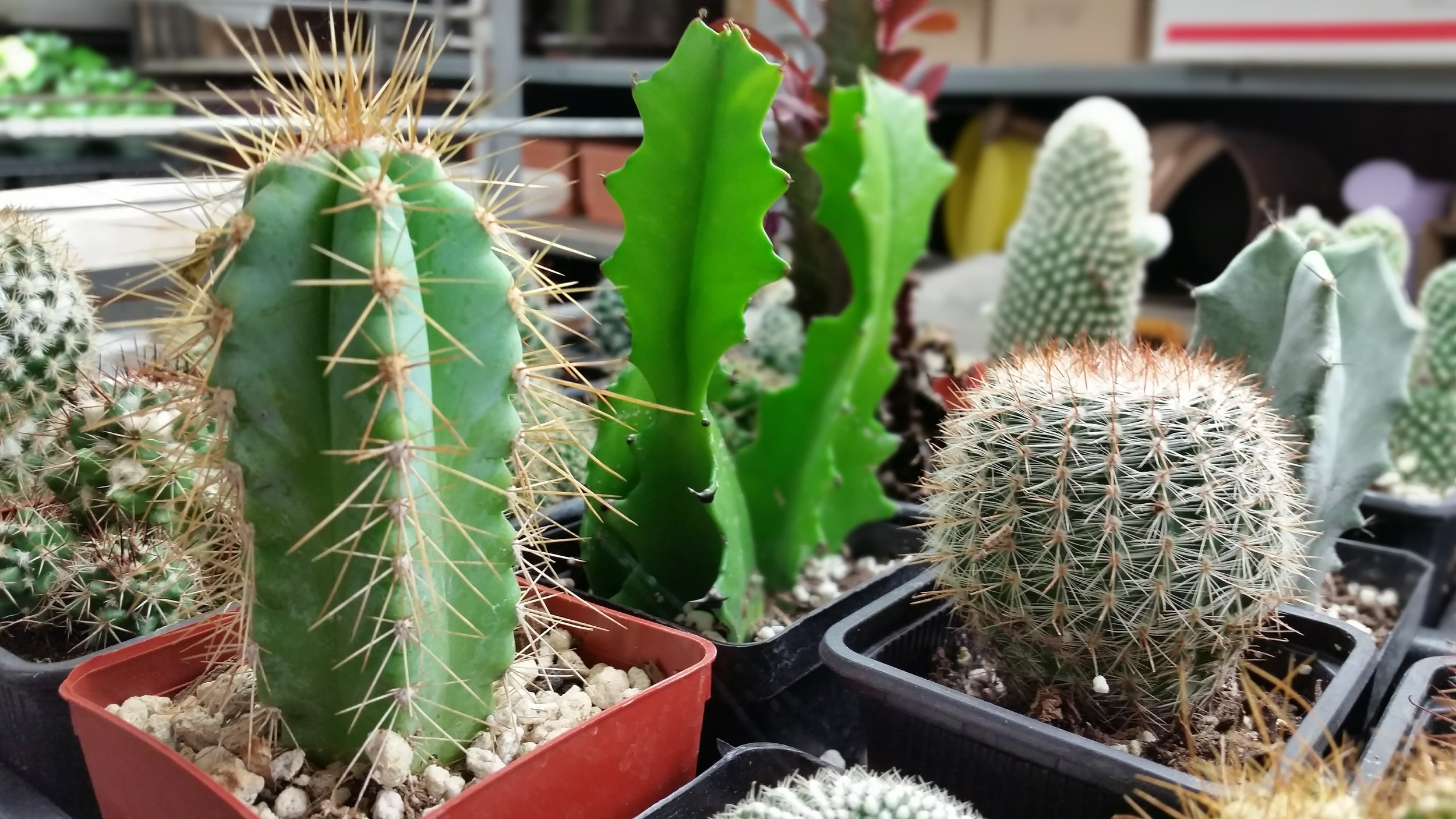 Assorted Cacti Photo Credits: Published to Web