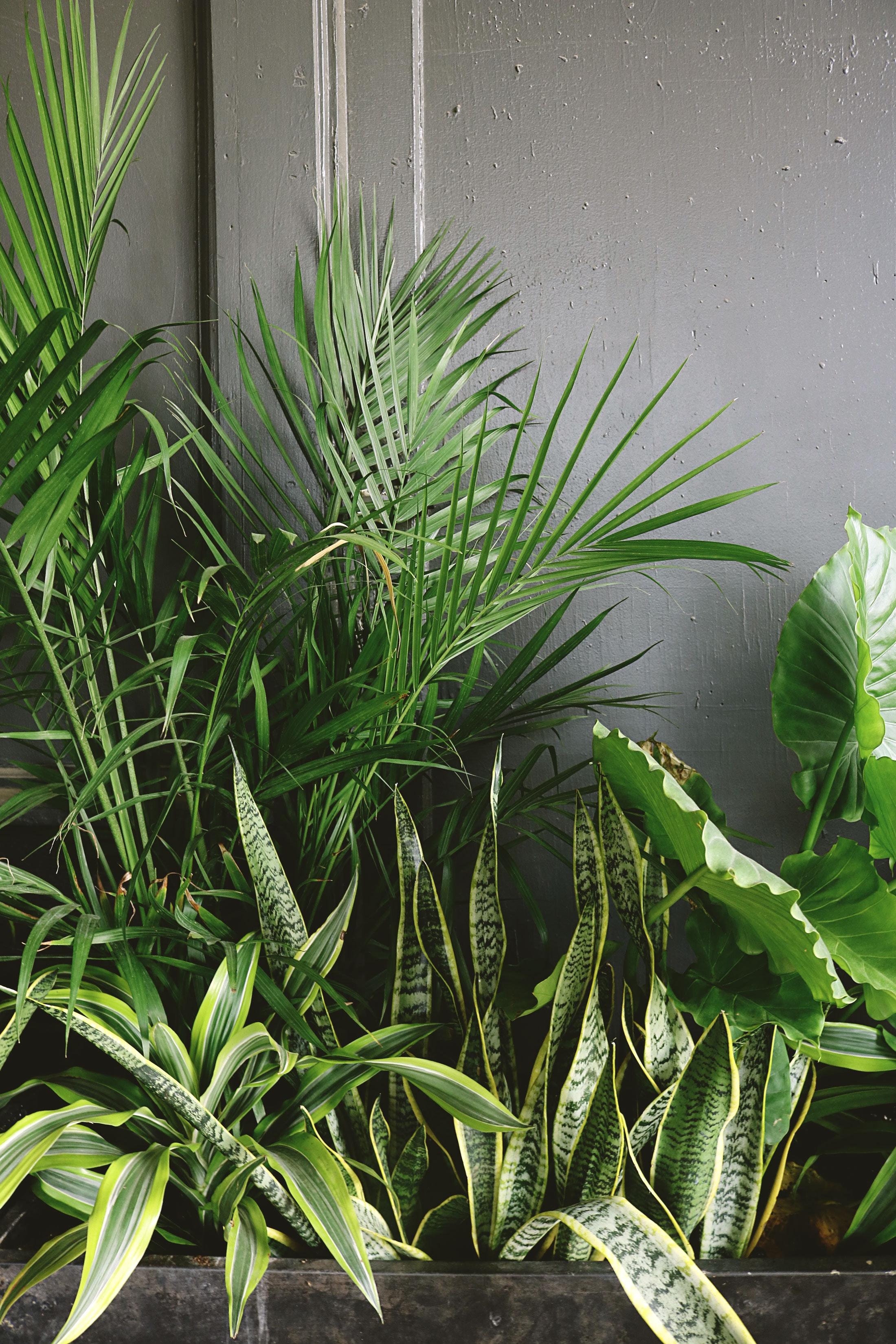 5 Houseplants to help you be healthy. - Handy Andy's Nursery