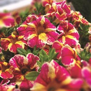 Candy Bouquet -