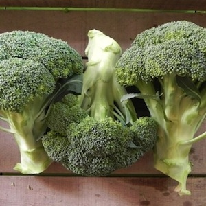 castle dome broccoli - Used primarily for extra early crown cuts in late spring or early summer. Compact plants have good holding ability and offer food heat tolerance as well as cold vigor. Uniform, medium green, heavy and deep domed heads have small, tight heads. Good tolerance to hollow stem and Brown Bead.