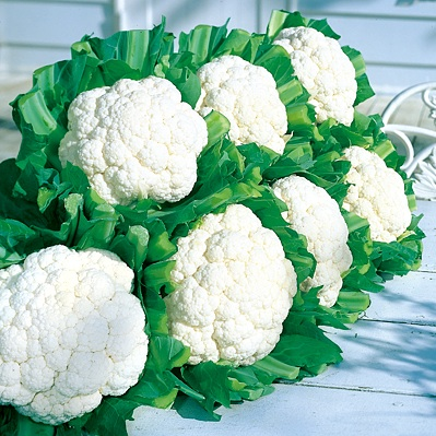 snow crown cauliflower - (All America Winner - 1975.)Early and vigorous growing snowball type. Head is well rounded, very smooth pure white, weighing about 2 lbs. and of excellent quality. Ideal for fresh or frozen market use.*Information taken from Germania Seed Company*