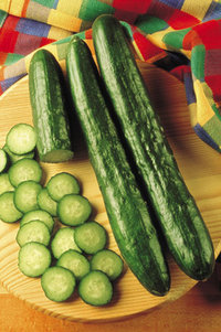 burpless - F-1 HybridTasty green. A new variety for those who shun cucumbers as being bitter and indigestible. They should be picked and eaten like celery when they are young; no peeling since the skin is soft and tender. Stake for best results. 9