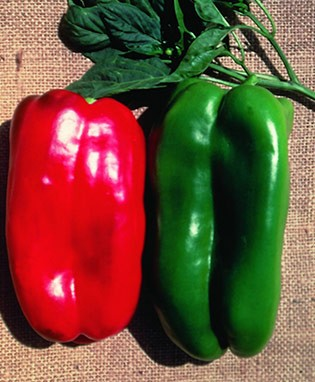 big bertha - F-1 HybridThe largest pepper on the market. Fruits are dep green with thick flesh. It is not unusual for fruits to reach 8-10