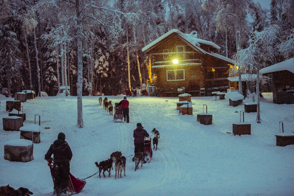 Learn all about life in the dog yard. - Our mushing tours start and end in our dog yard, so you will get lots of time to see how sled dogs (and mushers!) live.