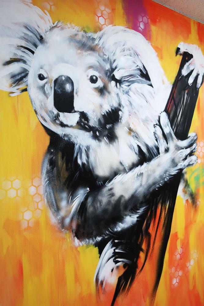 koala-1-w.jpg
