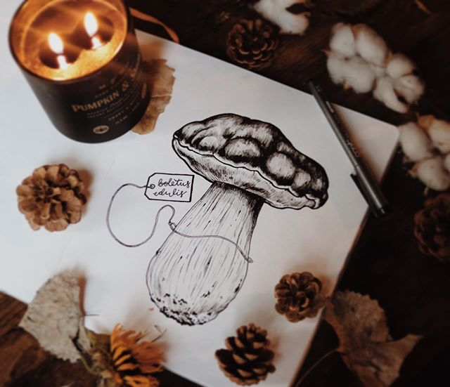 a lovely king bolete for tonight. not a fan of eating mushrooms, but they're fun to draw! : : : : #ink #drawing #inkdrawing #inktober #october #coloradomushrooms #mushroom #kingbolete #copic #multiliner #doodle #sketchbook #sketch #sketching #draw #pendrawing #penandink #art #artwork #denver #colorado #denverart #denverartist #coloradoart #coloradoartist #dailyart #illustration #illustrator #fall #autumn