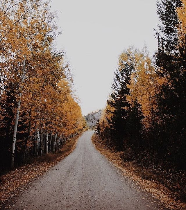 """""""Side? I am on nobody's side - because nobody is on my side... nobody cares for the woods anymore."""" : : : #autumn #fall #woods #forest #colorado #moodygram #outdoors #autumnvibes🍁 #trail #magicalmoments #leaves #october #granby #co #dirtroad #nature #fallvibes #autumnaesthetic #quietinthewild"""