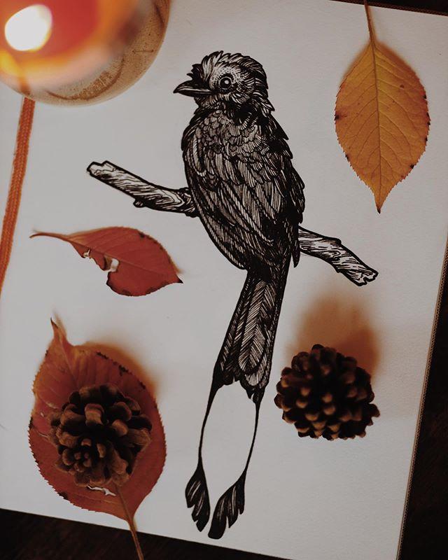 inktober day two🍁 another bird of course : : : #inktober #inktober2019 #ink #inkdrawing #drawing #illustration #artistsoninstagram #dailyart #denverart #denverartist #coloradoart #coloradoartist #october #fall #autumn #fallvibes #autumnvibes #animalart #natureart #sketch #sketchbook #colorado #denver #penandink #pendrawing #sketching #moodygram