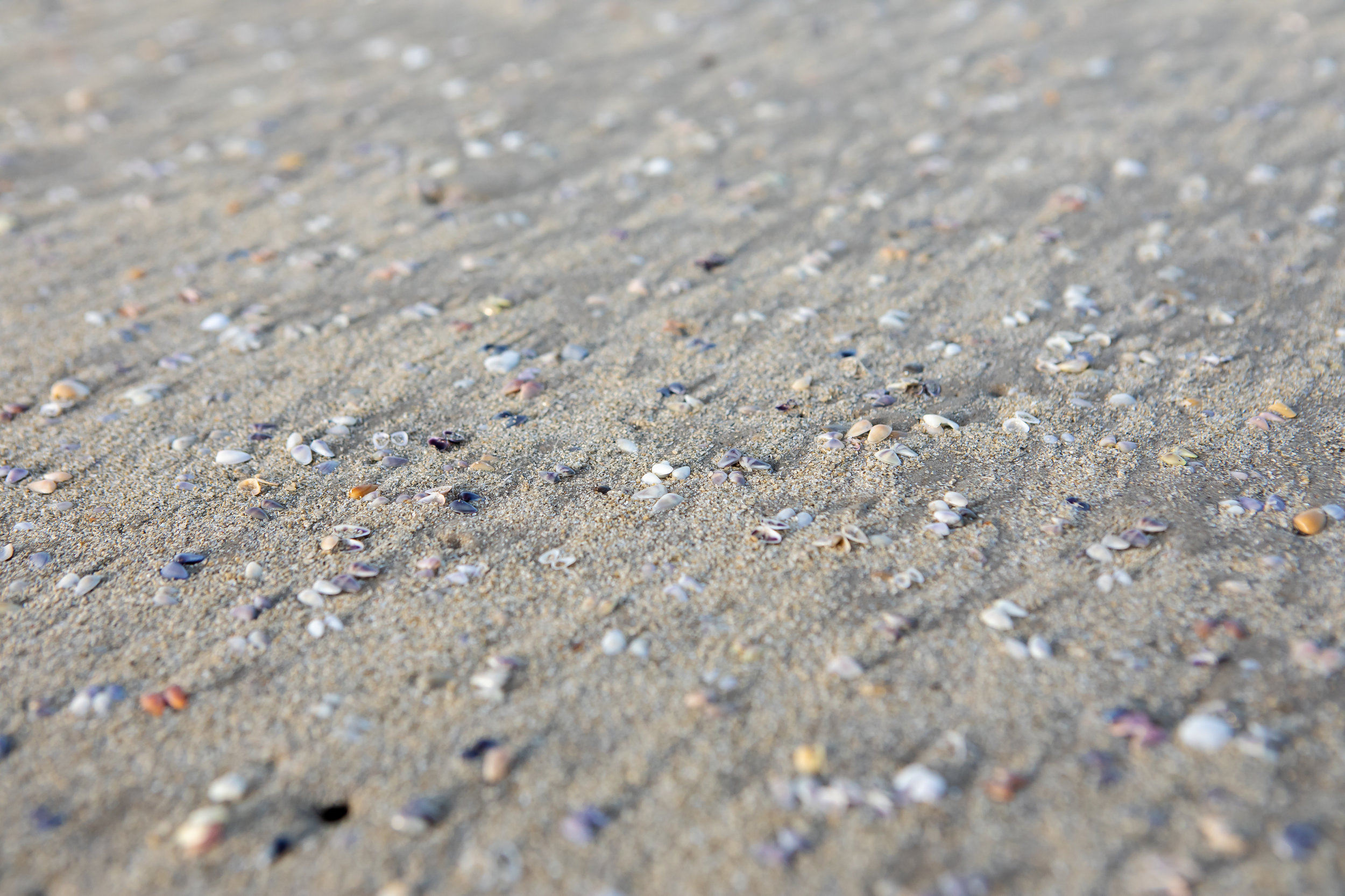 The beach was covered with these teeny tiny shells. | Padre Island National Seashore, Texas | June 2018